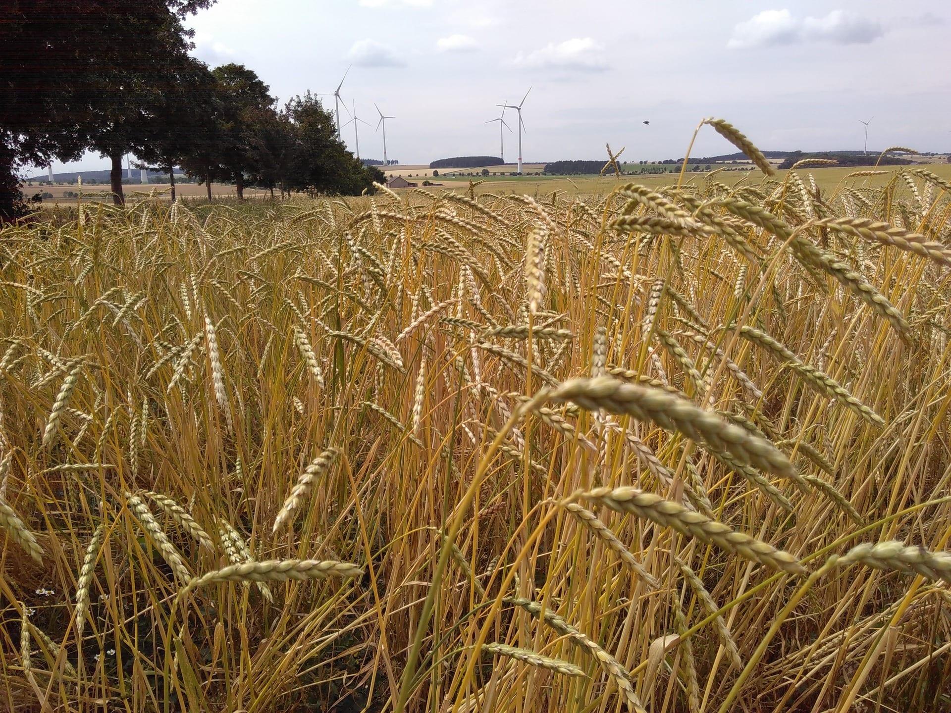 Schäler: Industrielle Lösungen zur Verarbeitung des Getreides
